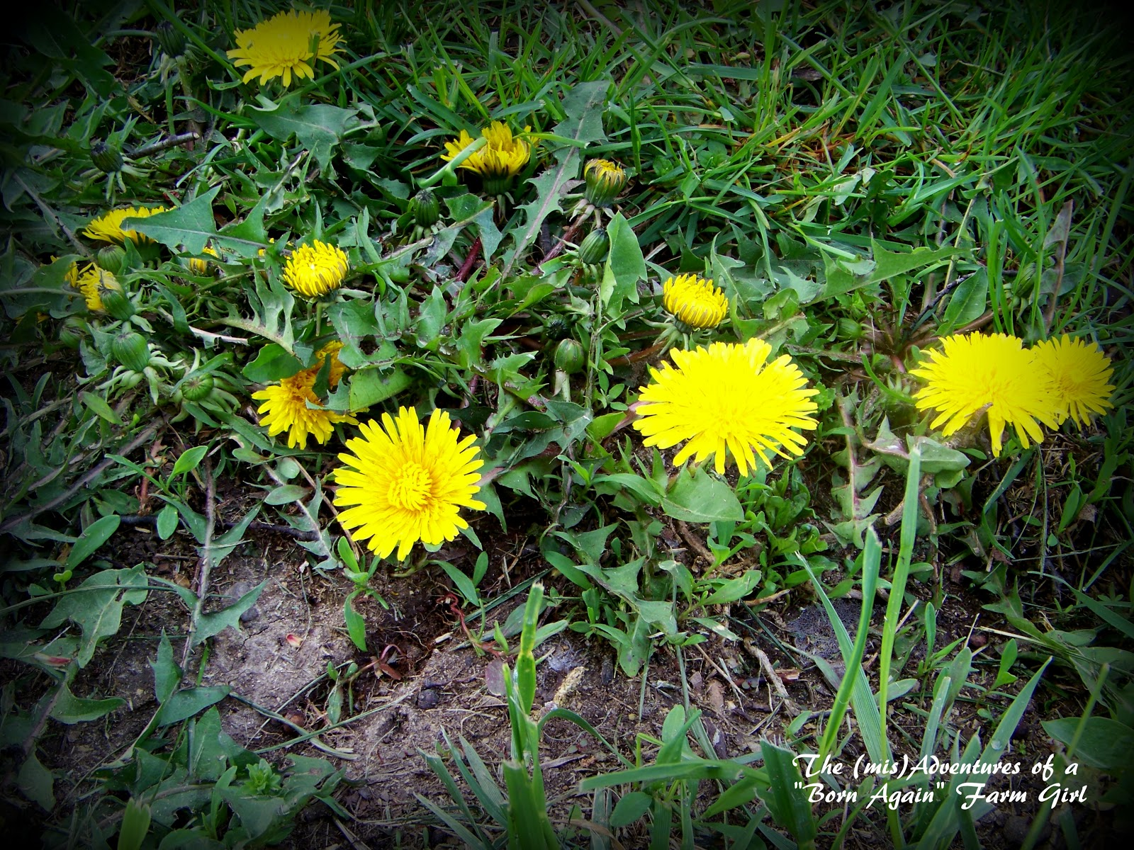 Weed With Yellow Flowers 1 Background Hdflowerwallpaper