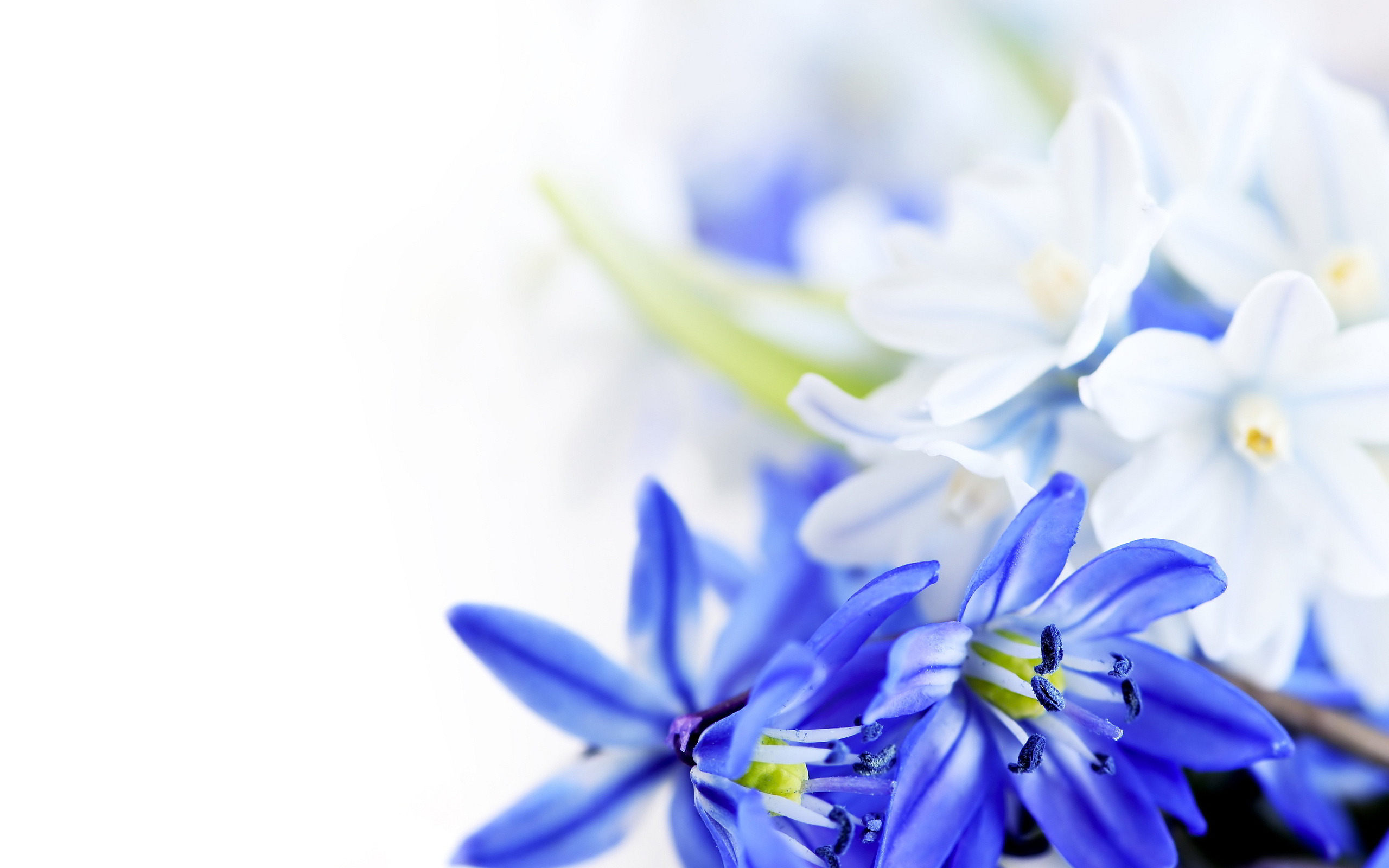 White floral wallpaper 10 cool hd wallpaper for Cool floral wallpaper