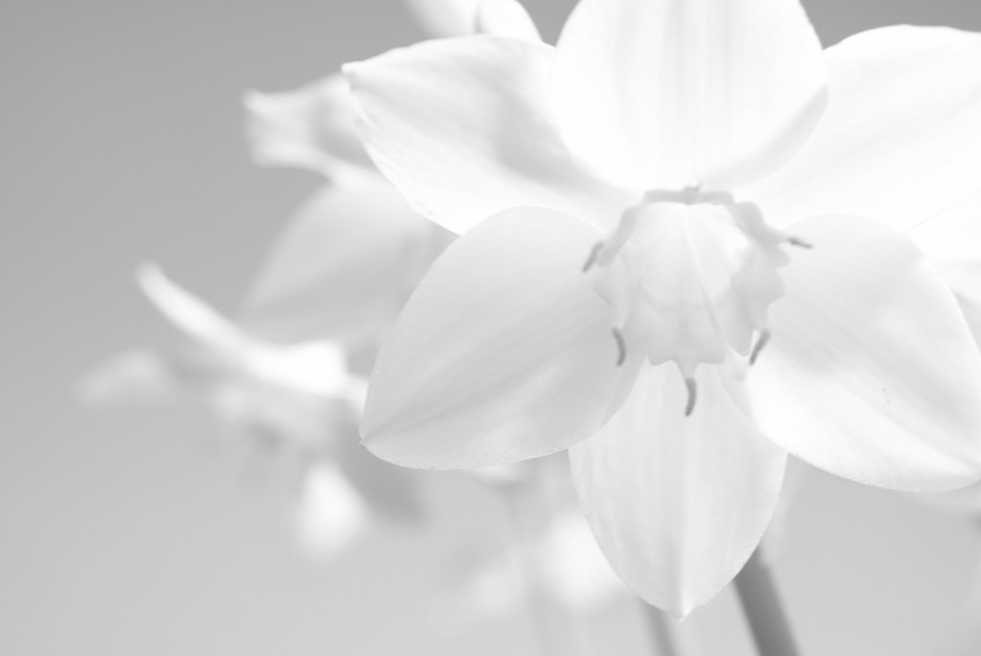 White Flowers Wallpaper For Pc Full Hd Pictures White Hd