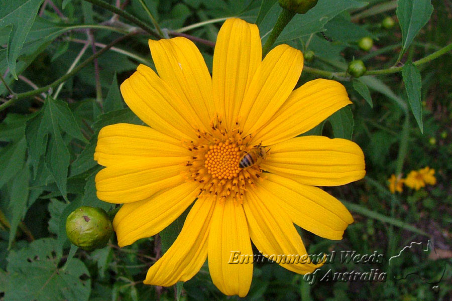 Yellow flower perennial 34 free wallpaper hdflowerwallpaper yellow flower perennial free wallpaper mightylinksfo Choice Image