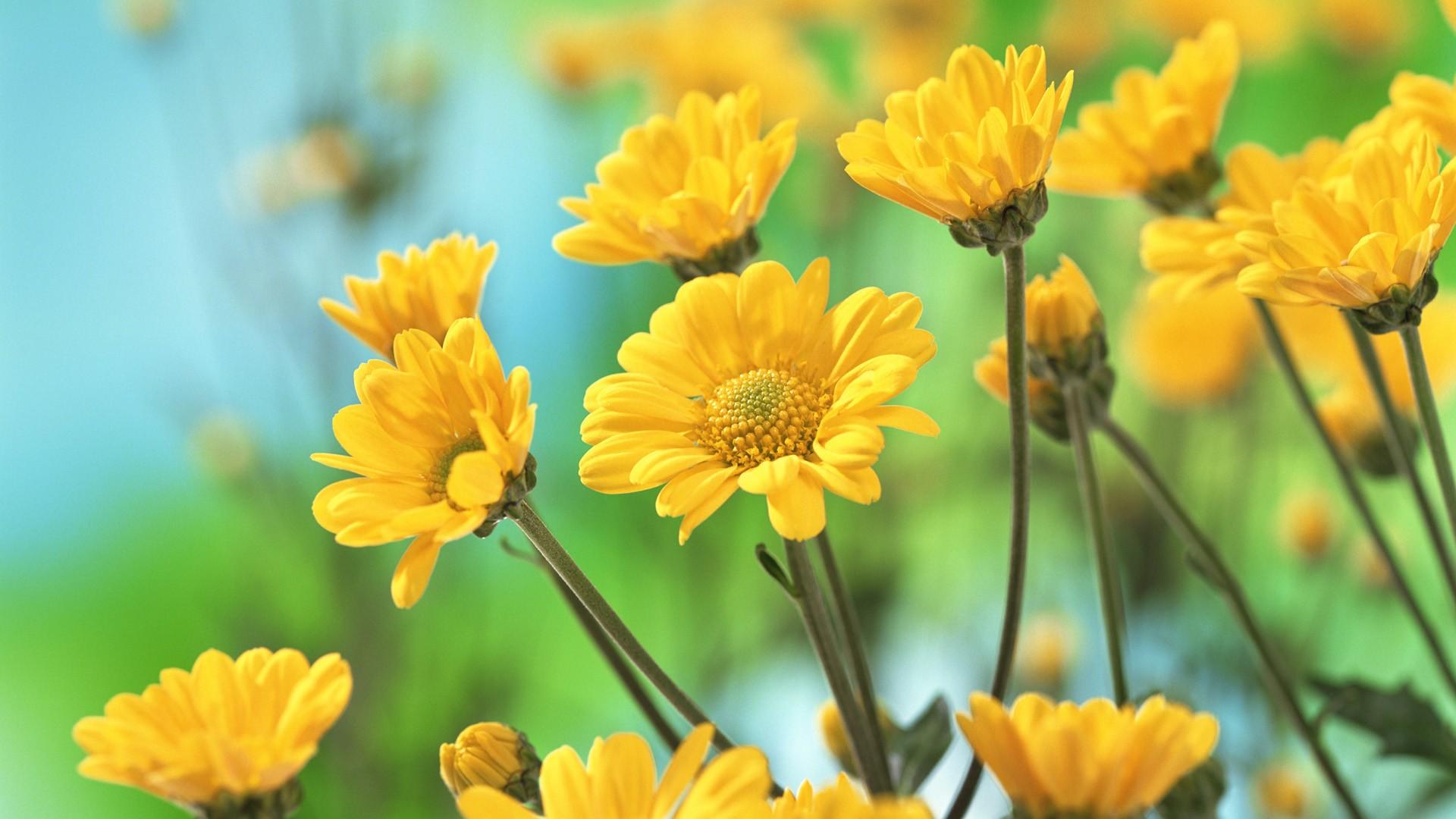 Yellow Flower Wallpaper Free