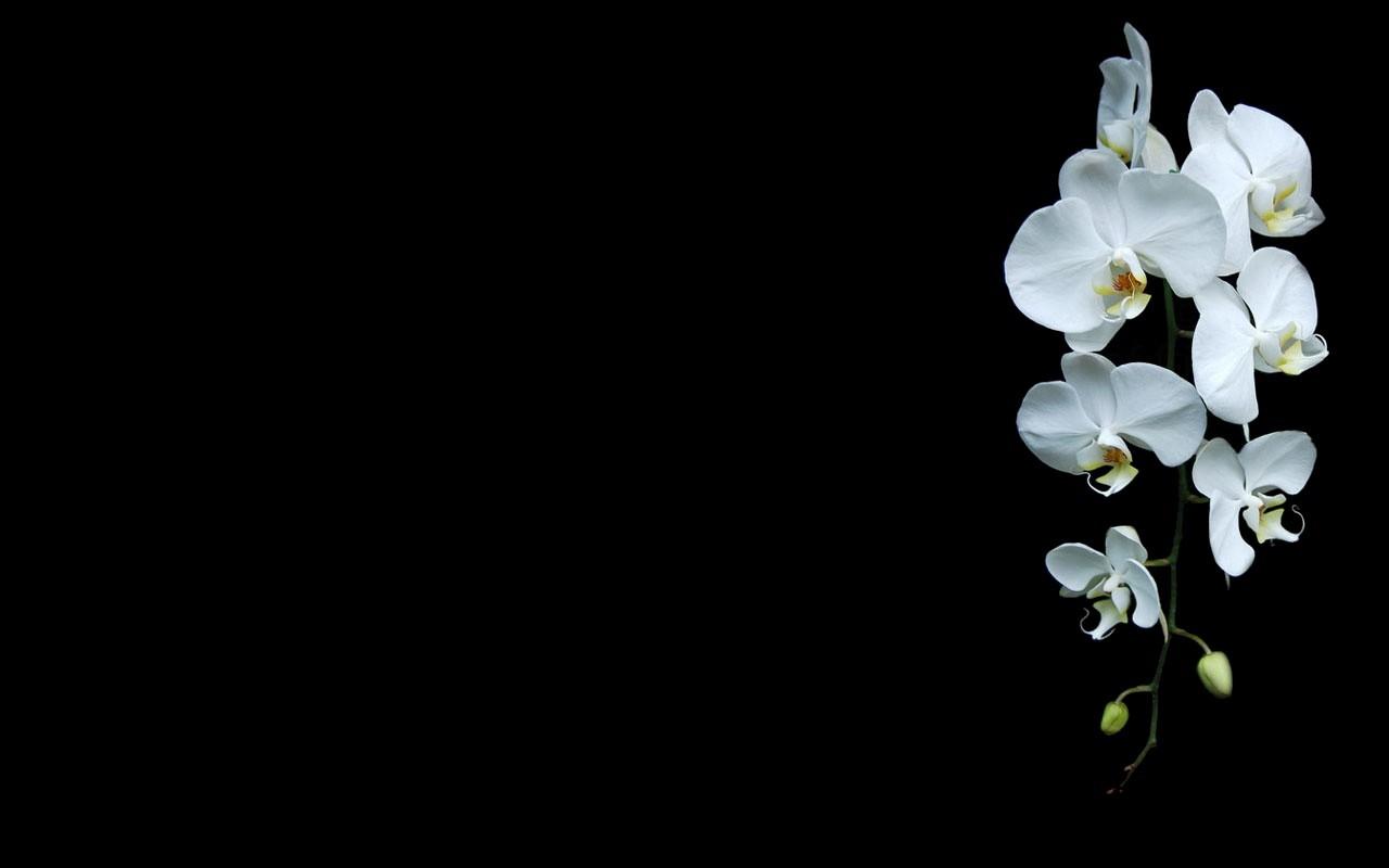 Black flowers in nature 25 widescreen wallpaper - Flower wallpaper black ...