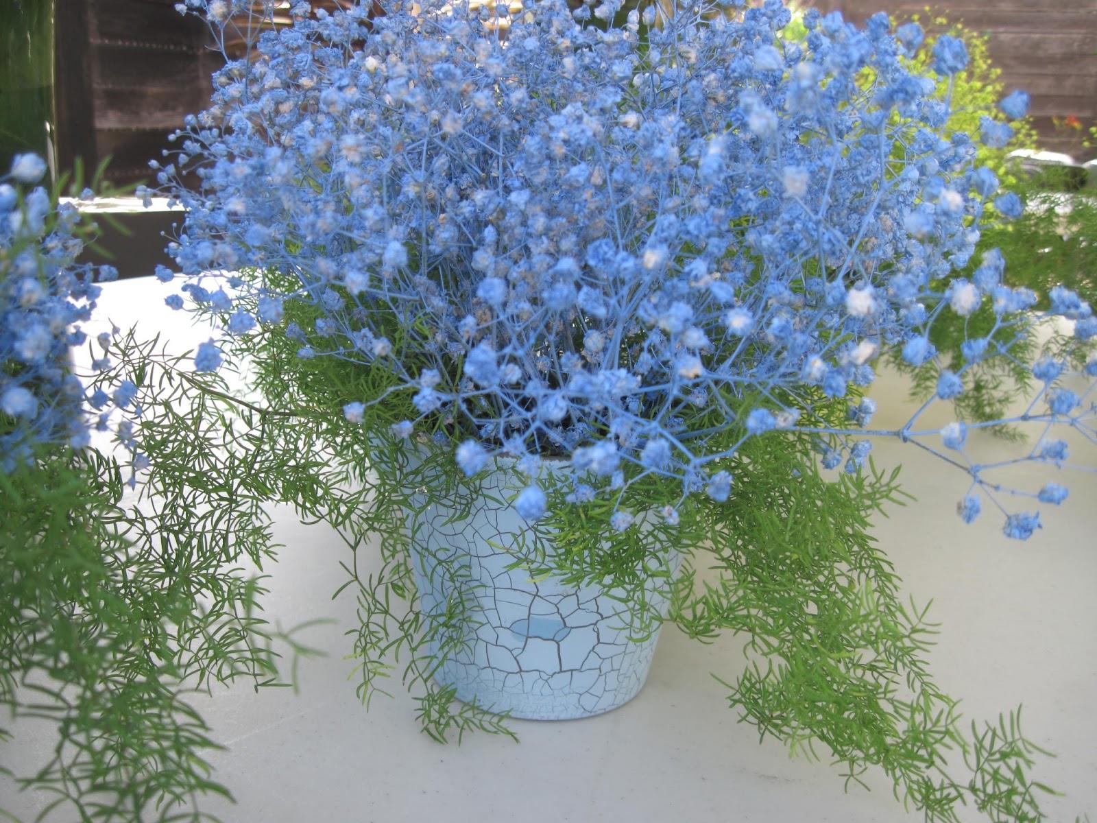Blue flowers for floral arrangements desktop wallpaper
