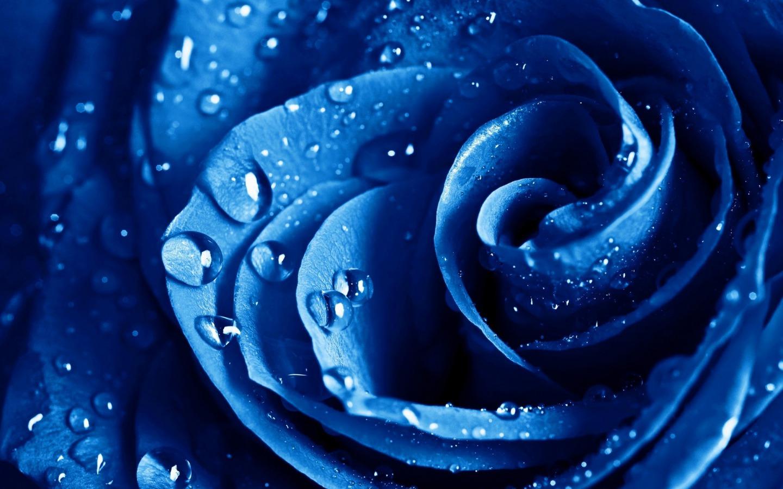 Blue Flowers Hd Wallpapers 46 Wallpaper