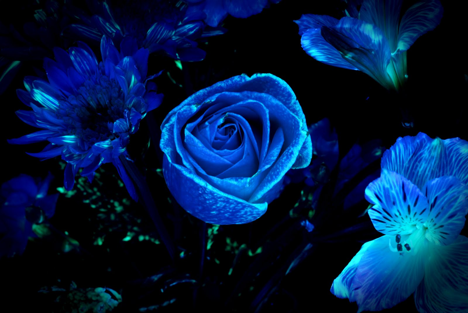 Dark Flowers Names 14 Desktop Background