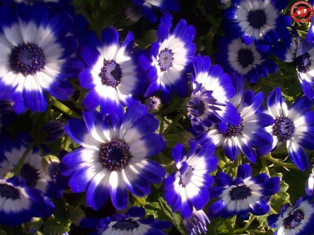 Dark Blue Flowers Names