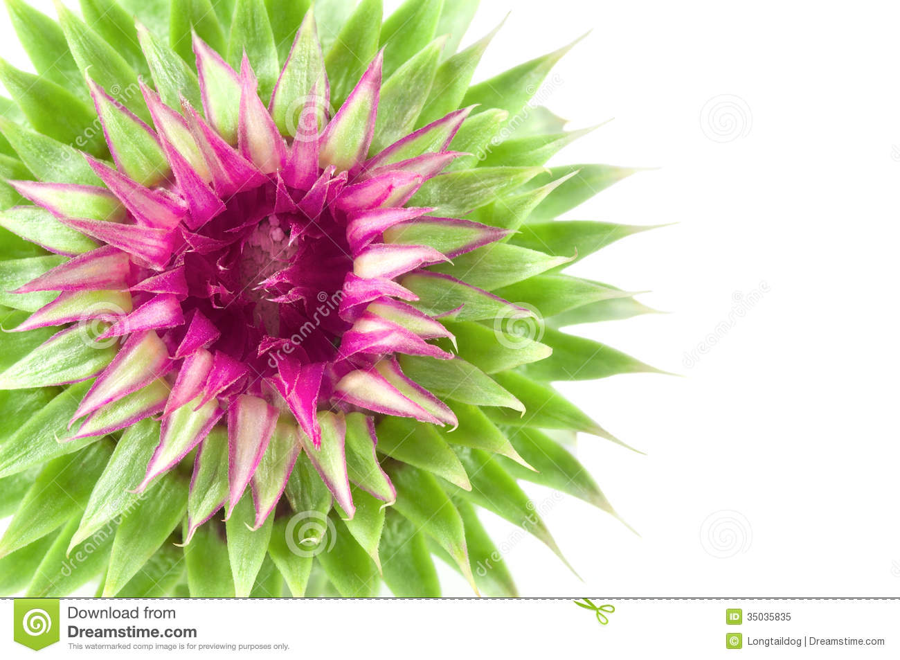 Green exotic flowers 8 cool wallpaper hdflowerwallpaper green exotic flowers free wallpaper mightylinksfo
