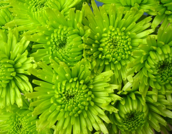Green Flowers Images And Names 9 Desktop Background ...
