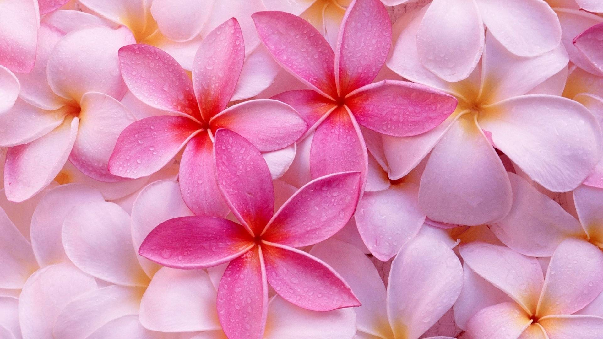 pink flowers hd wallpapers 20 cool wallpaper - hdflowerwallpaper