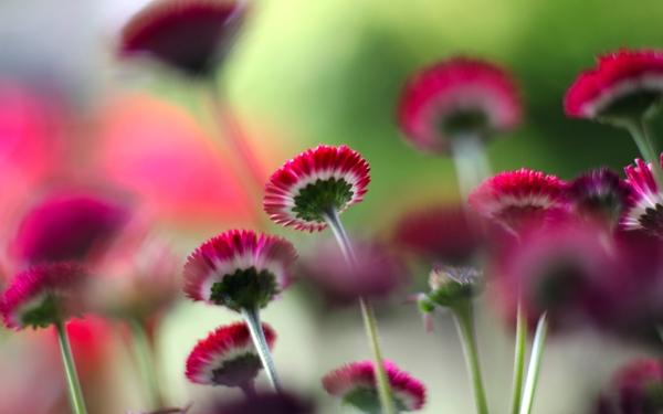 картинки на экран рабочего стола цветы № 523486 загрузить