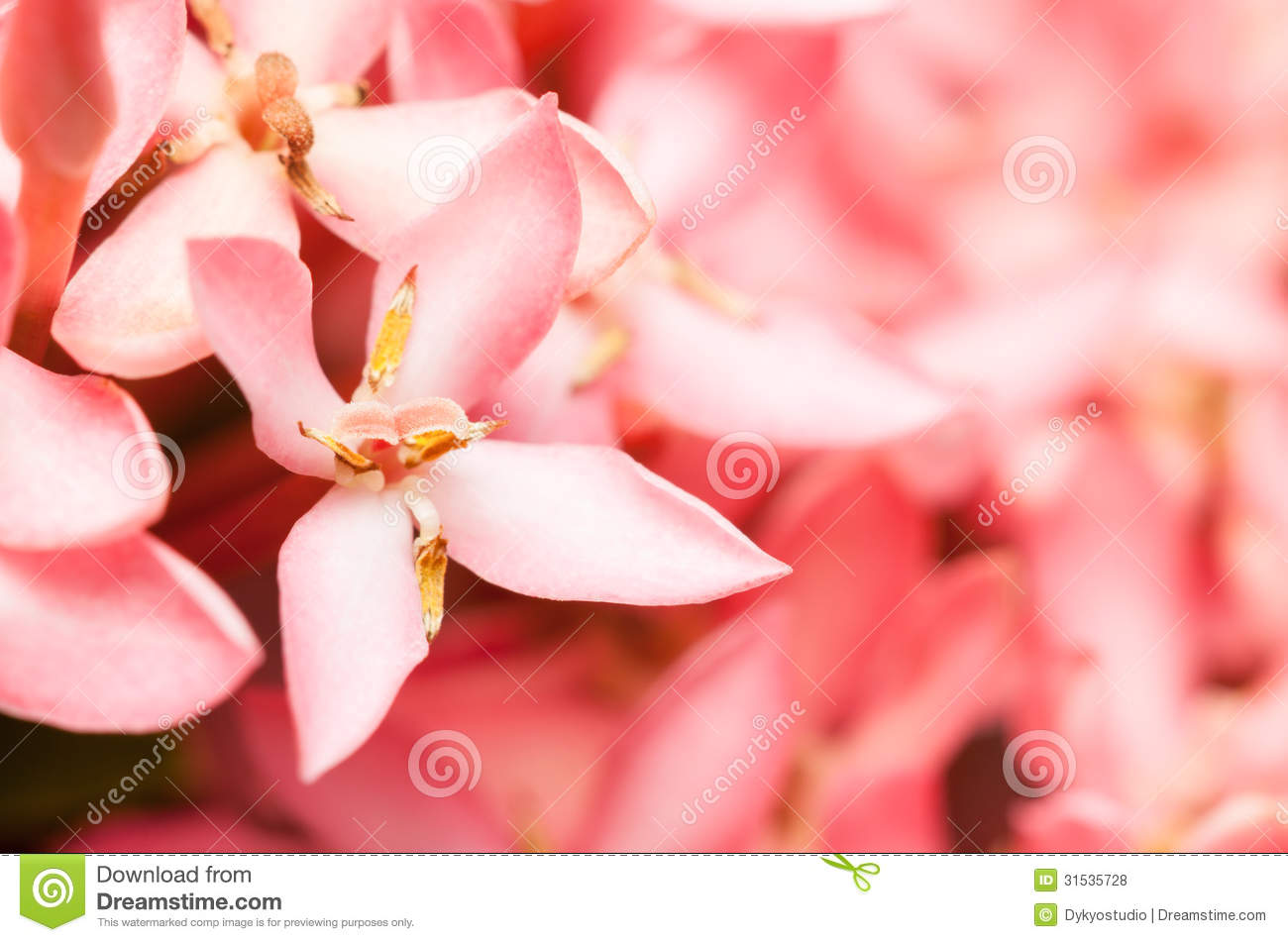 Pink jasmine flowers 17 widescreen wallpaper hdflowerwallpaper pink jasmine flowers free wallpaper izmirmasajfo
