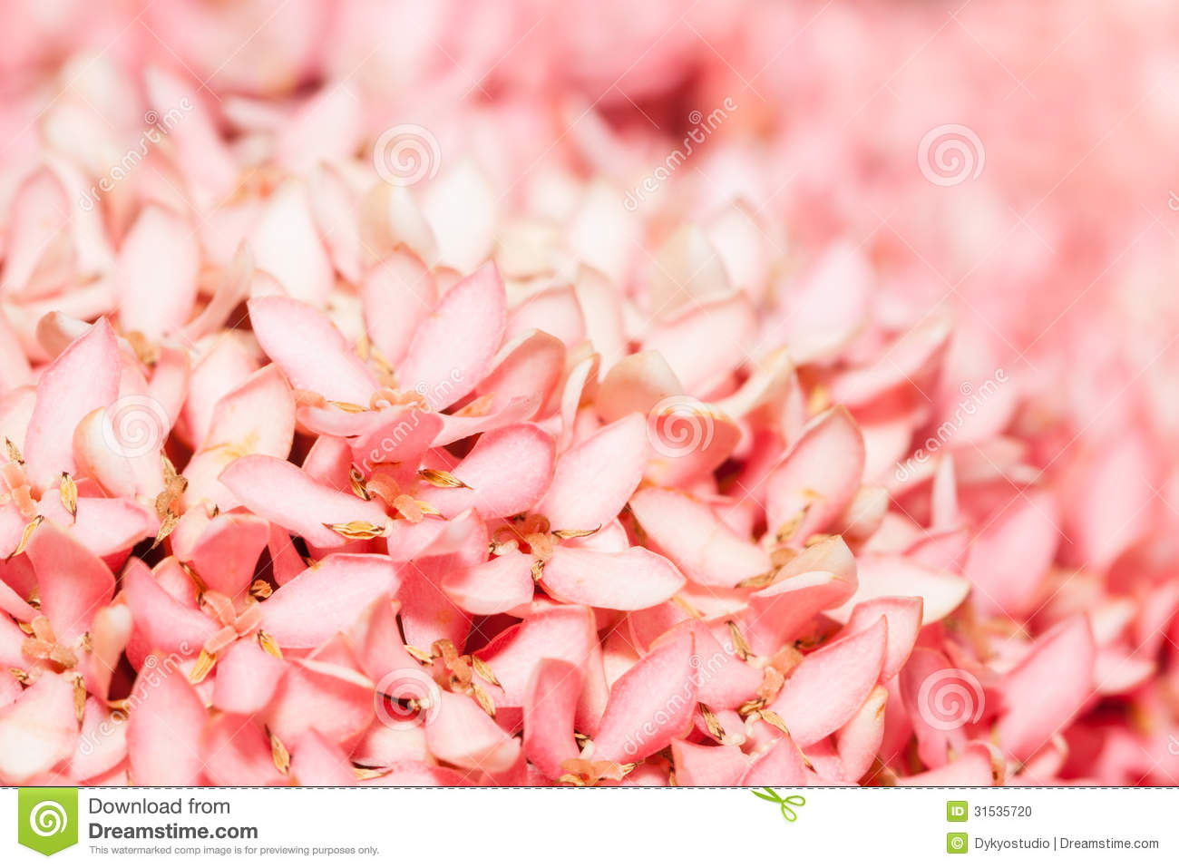 Pink jasmine flowers 40 background hdflowerwallpaper pink jasmine flowers hd wallpaper izmirmasajfo