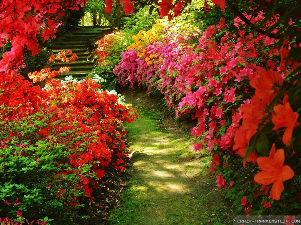 Red flowers for garden 20 cool hd wallpaper for Flower landscape