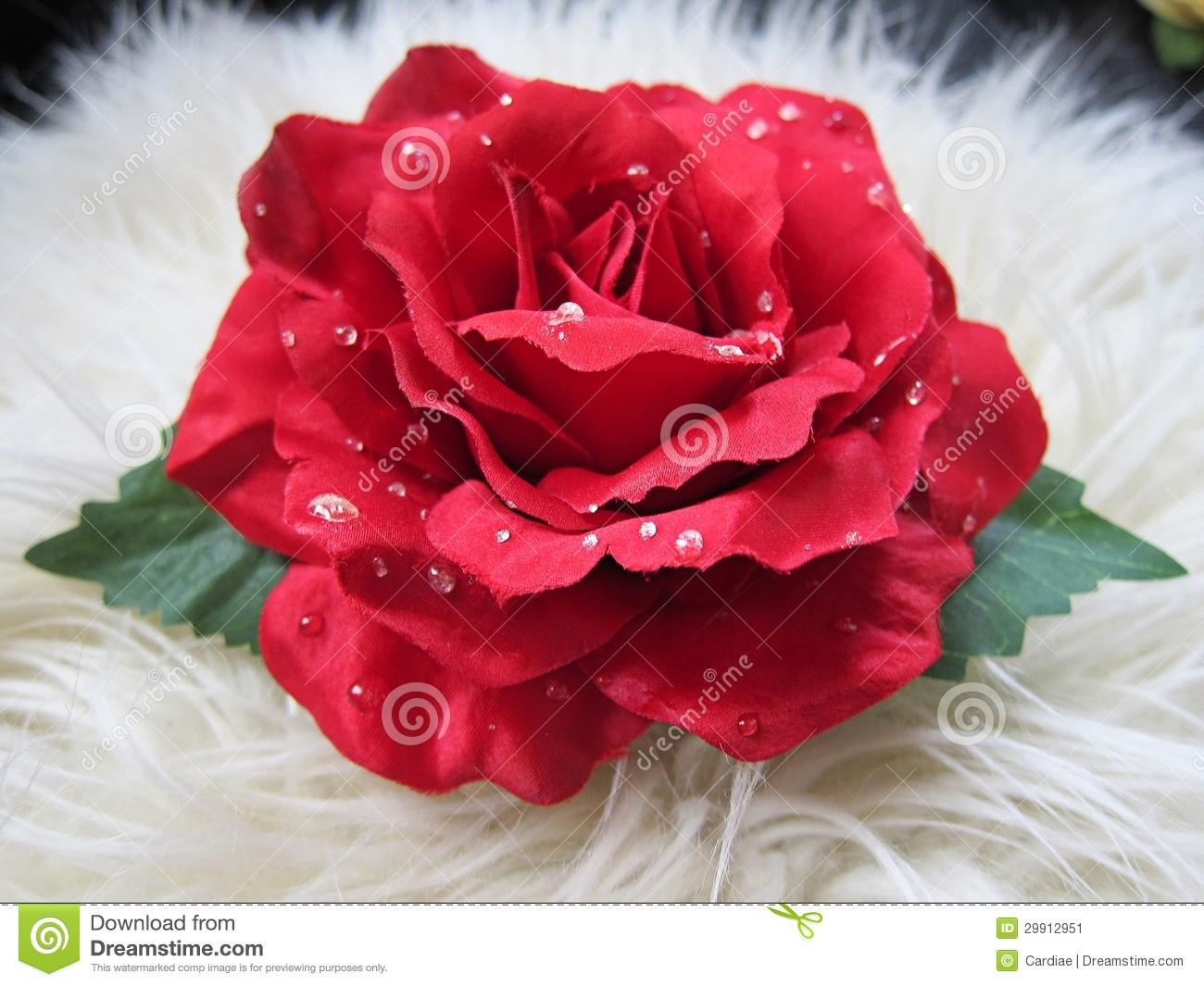 Red Flowers For Hair 5 Cool Wallpaper Hdflowerwallpaper