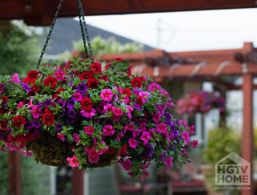 Flower Tower Hanging Baskets : Red flowers for hanging baskets wide wallpaper