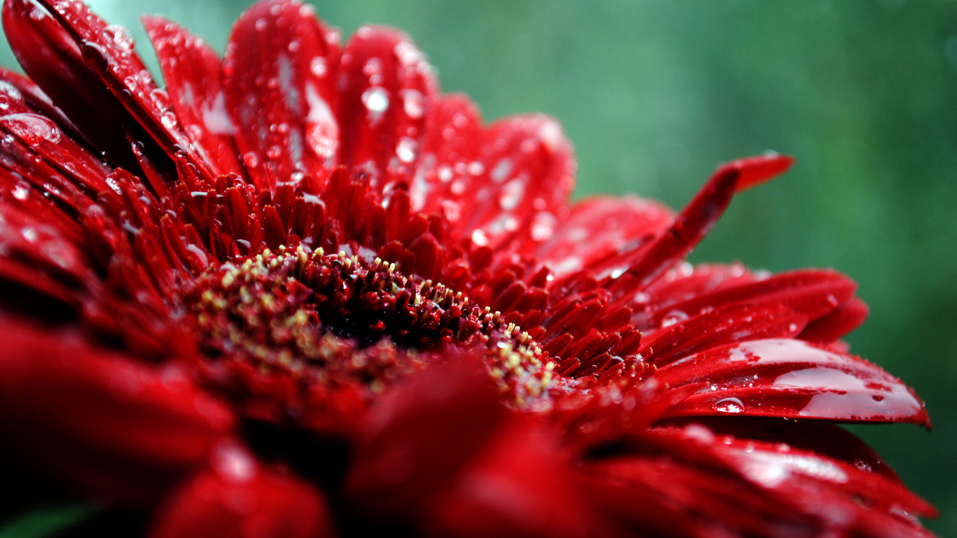 Red Flowers In Spring 20 High Resolution Wallpaper