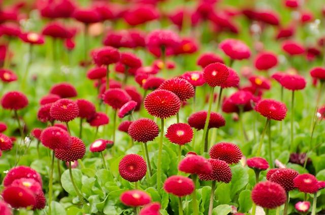 Red Flowers In Spring  27 Hd Wallpaper