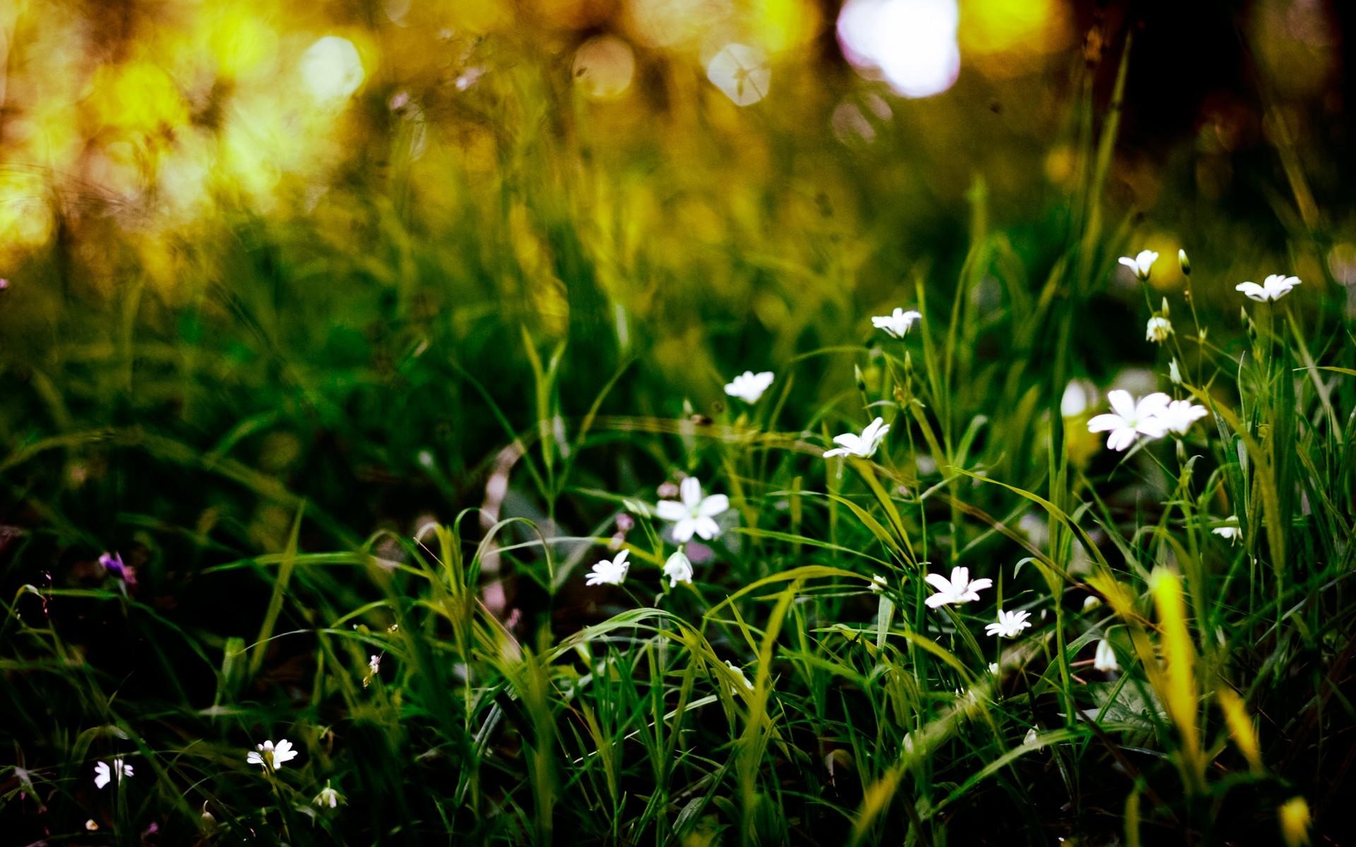 White Flowers In Grass 18 Background Wallpaper Hdflowerwallpaper