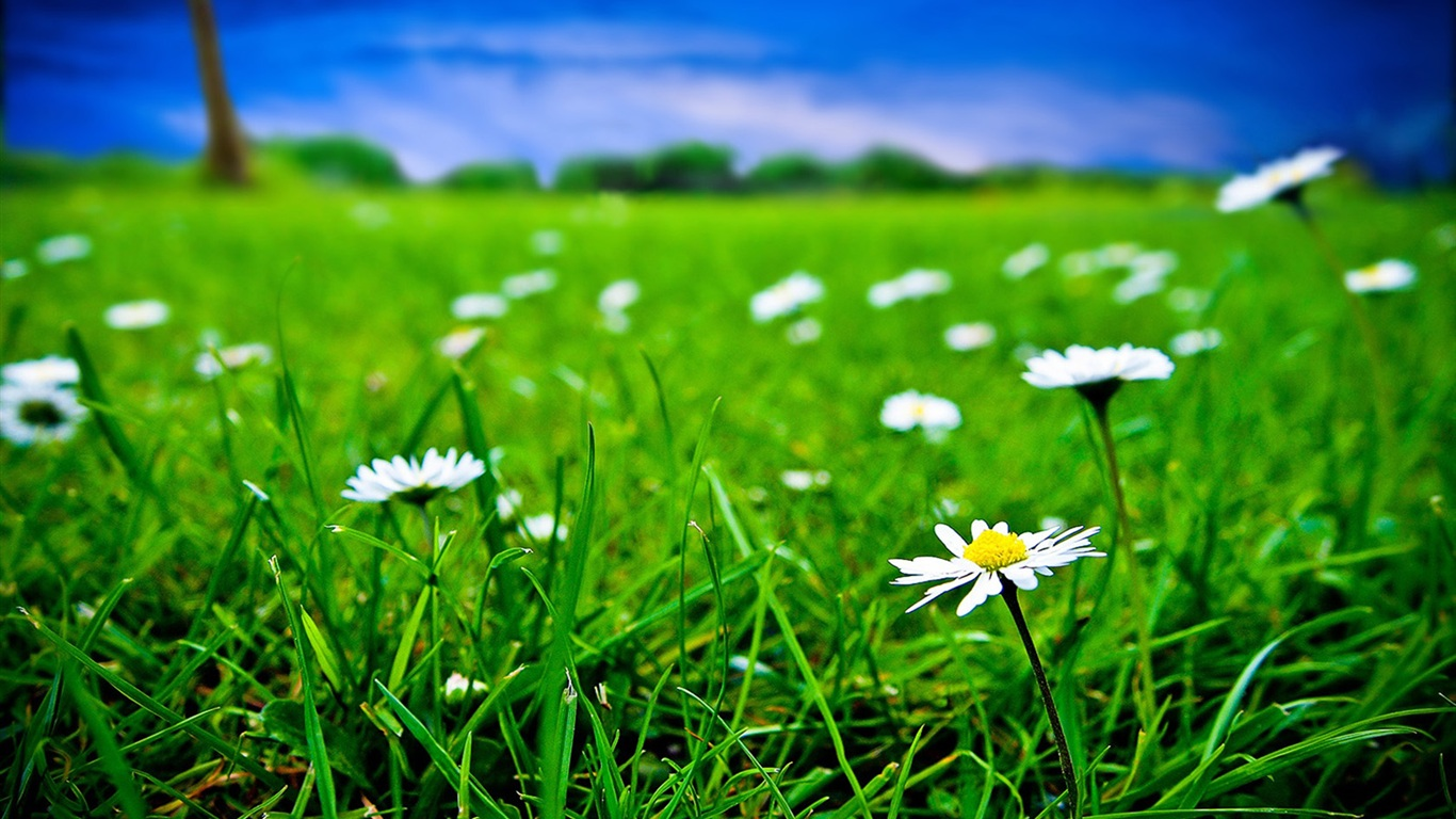 White flowers in grass 29 desktop background hdflowerwallpaper white flowers in grass background mightylinksfo Choice Image
