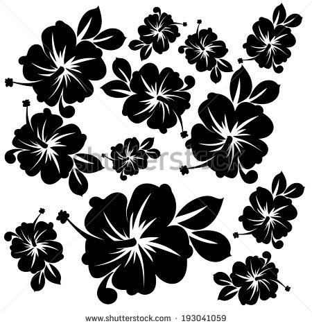 White Flowers In Hawaii 11 Wide Wallpaper Hdflowerwallpaper