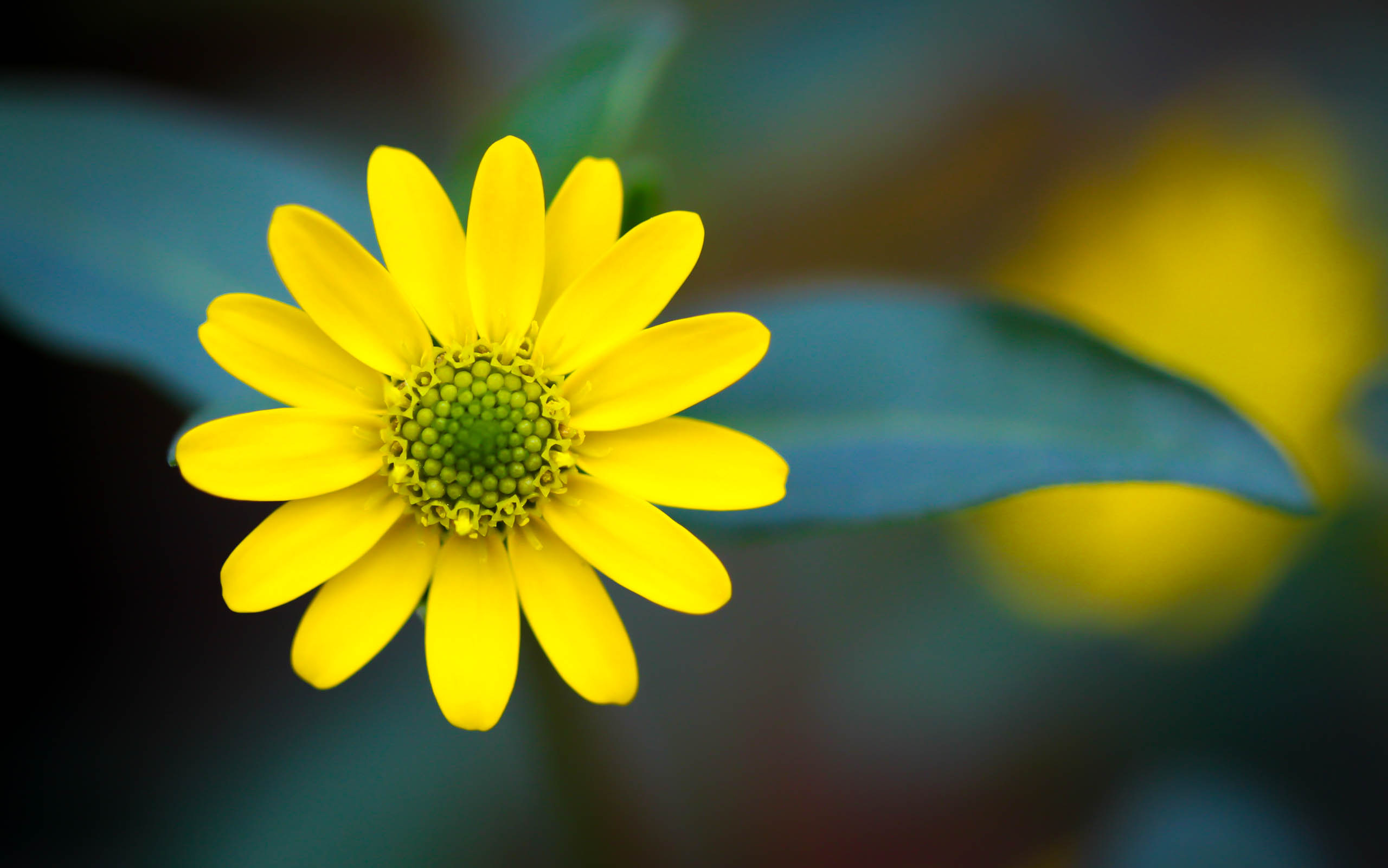 yellow flowers hd 1 wide wallpaper - hdflowerwallpaper