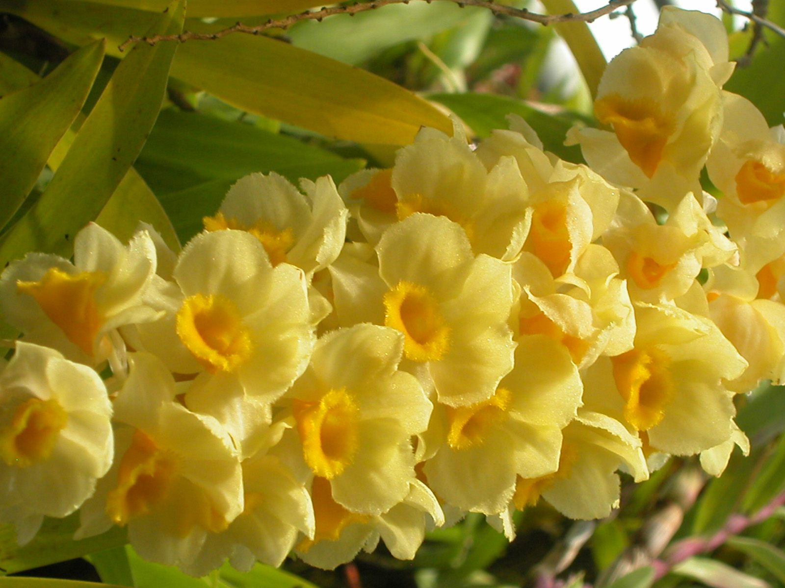 Yellow flowers images 6 free hd wallpaper hdflowerwallpaper yellow flowers images hd wallpaper mightylinksfo
