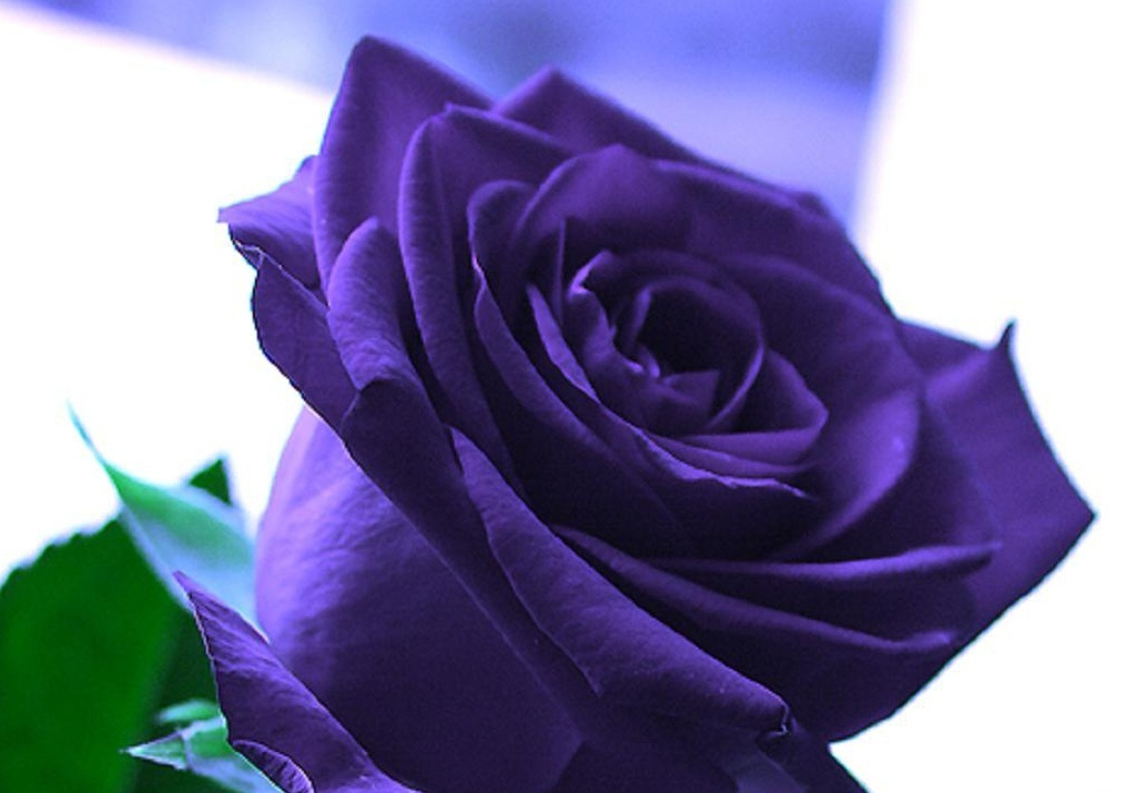 Beautiful Flowers Wallpaper Blue On 11 Free