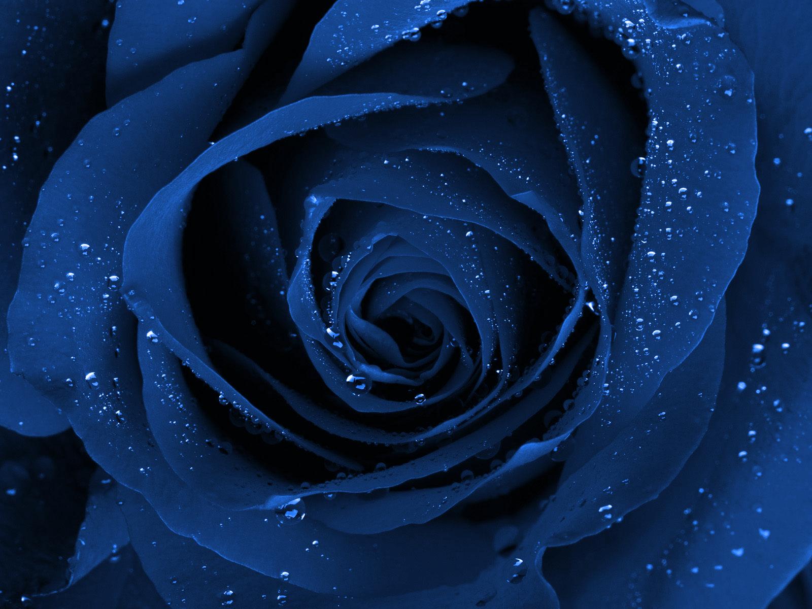 Beautiful Flowers Wallpaper Blue On Widescreen