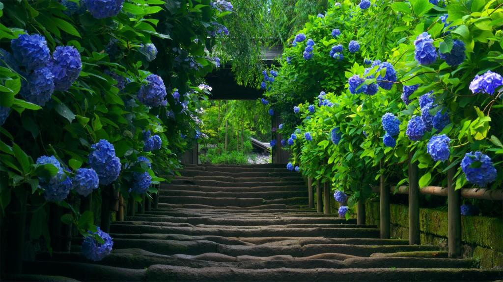 обои для рабочего стола природа цветы № 509973 загрузить