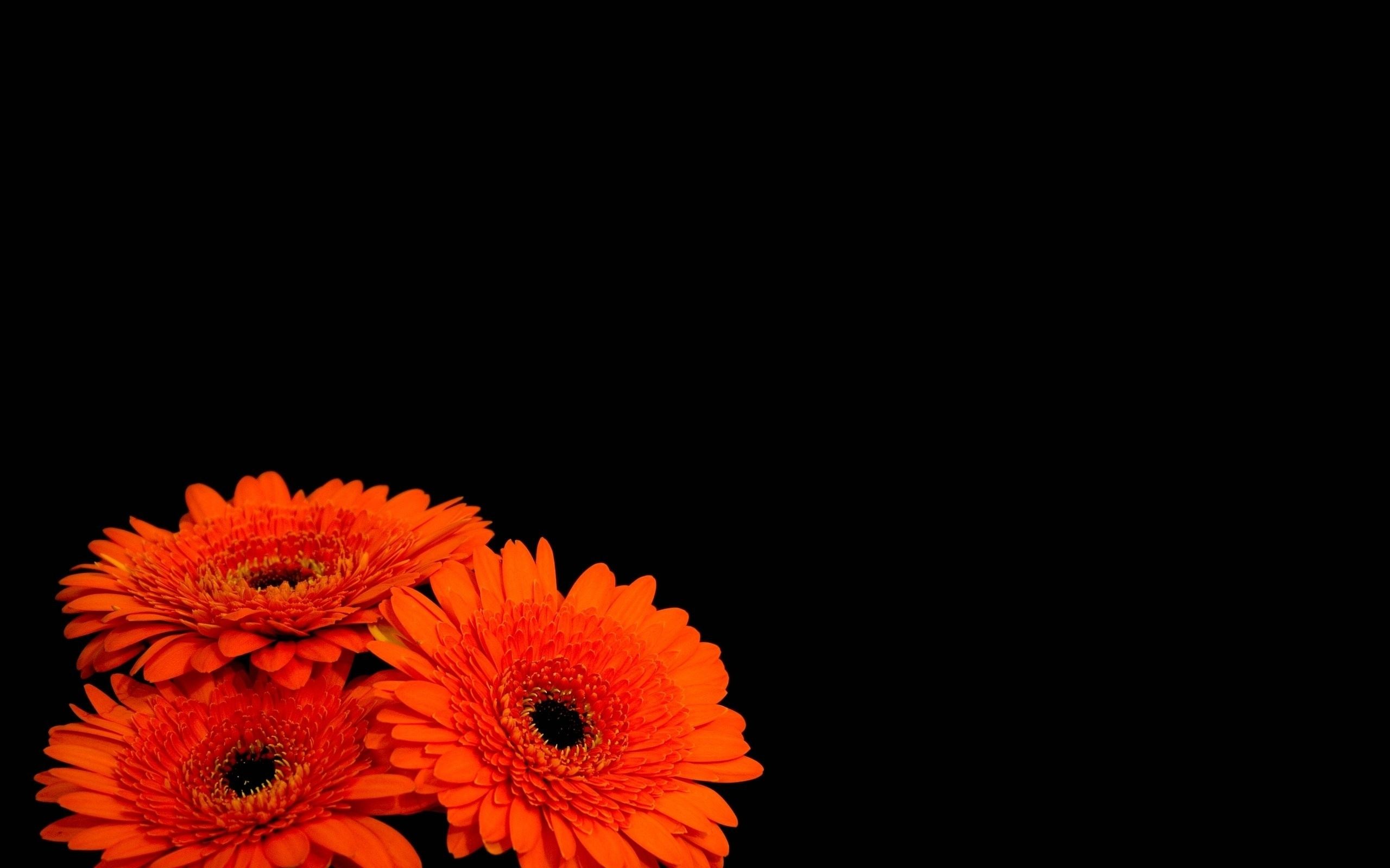 Black Background Wallpaper With Flowers 1 Background ...