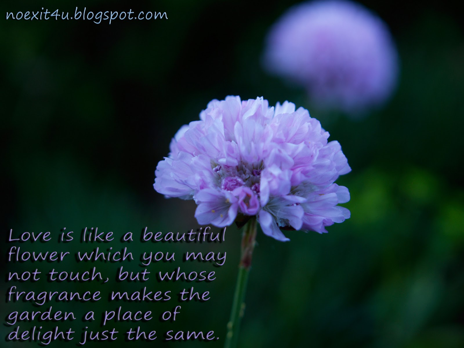 flower quotes hd hdflower com