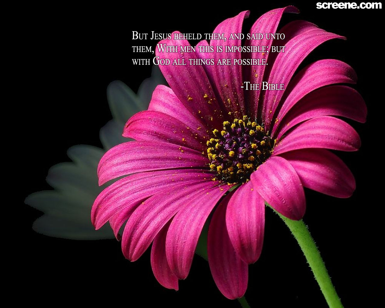Flower wallpaper quotes 2 free hd wallpaper hdflowerwallpaper download convert view source tagged on flower wallpaper quotes free voltagebd Image collections