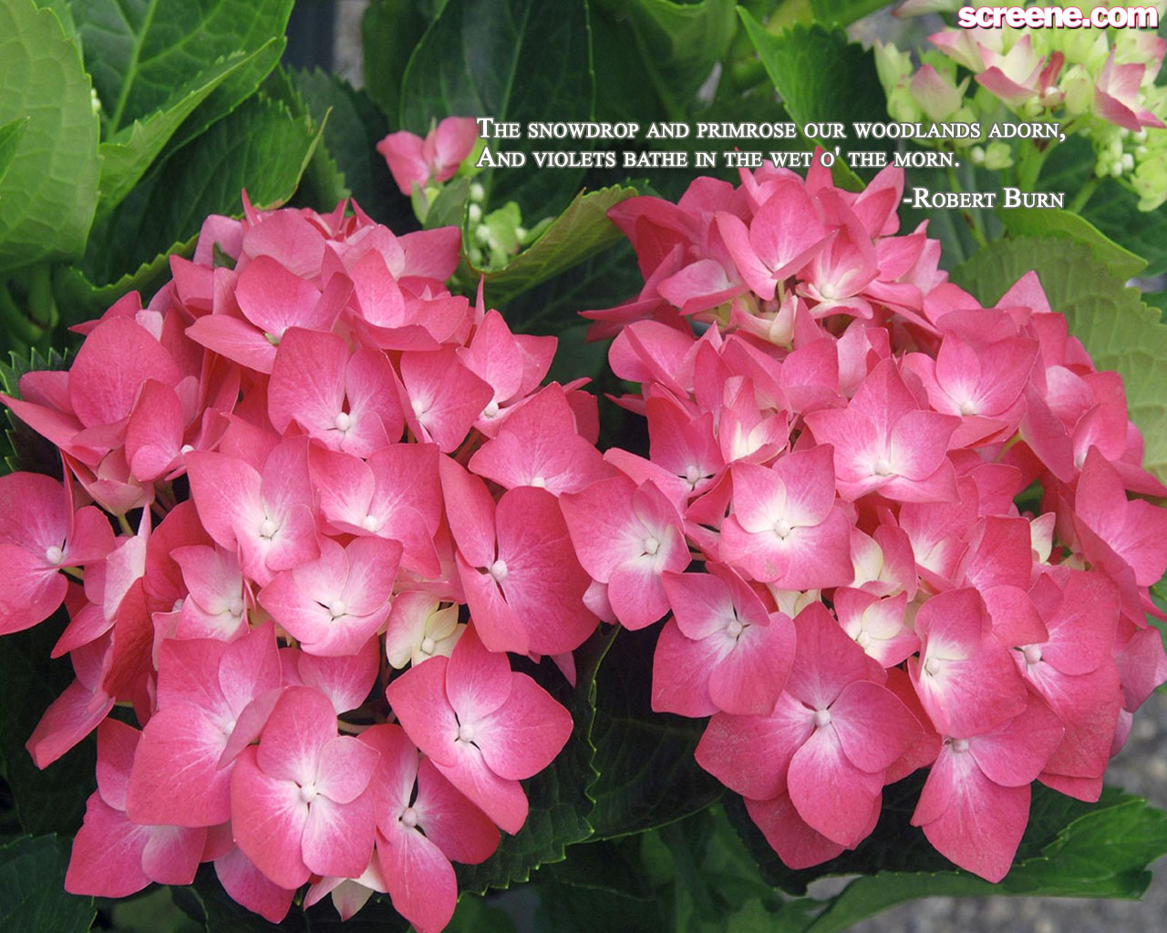 Flower Wallpaper Quotes 4 Background Hdflowerwallpaper