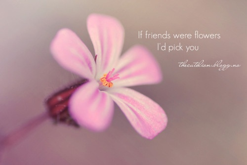 Pink flowers quotes 13 free wallpaper hdflowerwallpaper pink flowers quotes 13 free wallpaper voltagebd Image collections