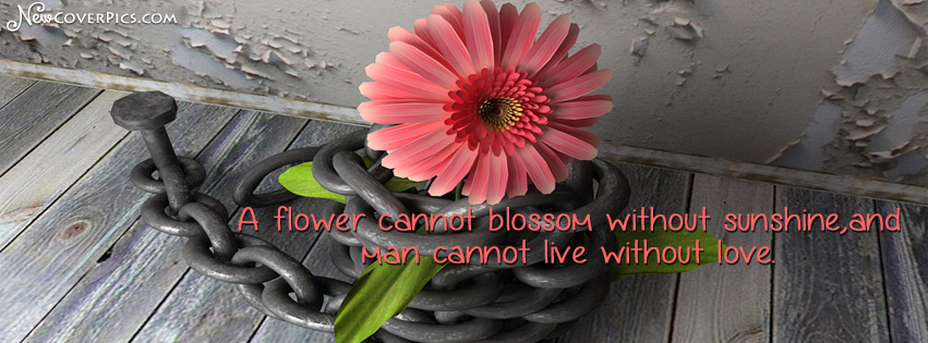 Pink flowers quotes 14 high resolution wallpaper hdflowerwallpaper pink flowers quotes free wallpaper mightylinksfo