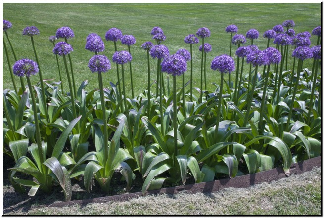 Purple Flowers Plants Widescreen Wallpaper