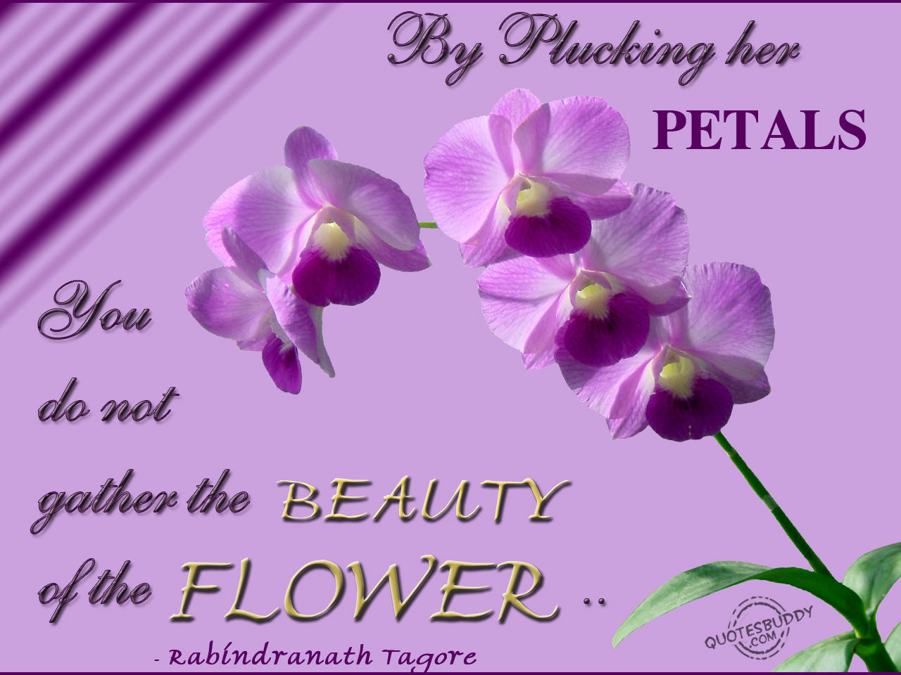 Lovely Purple Flowers Quotations Widescreen Wallpaper Photo Gallery