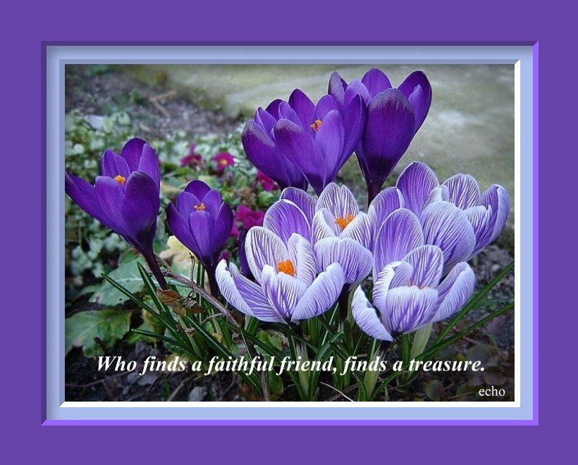 Purple Flowers Quotes Wide Wallpaper