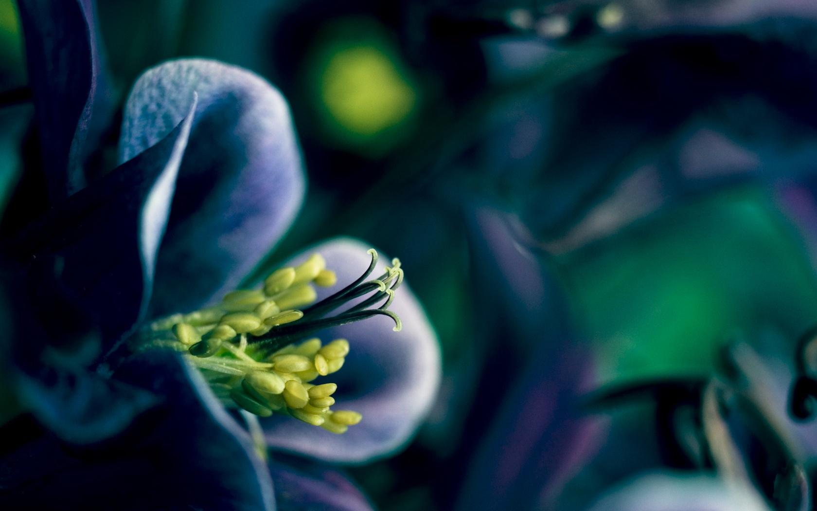 Purple Flowers That Bloom At Night 33 Desktop Background HdFlowerWallpaper