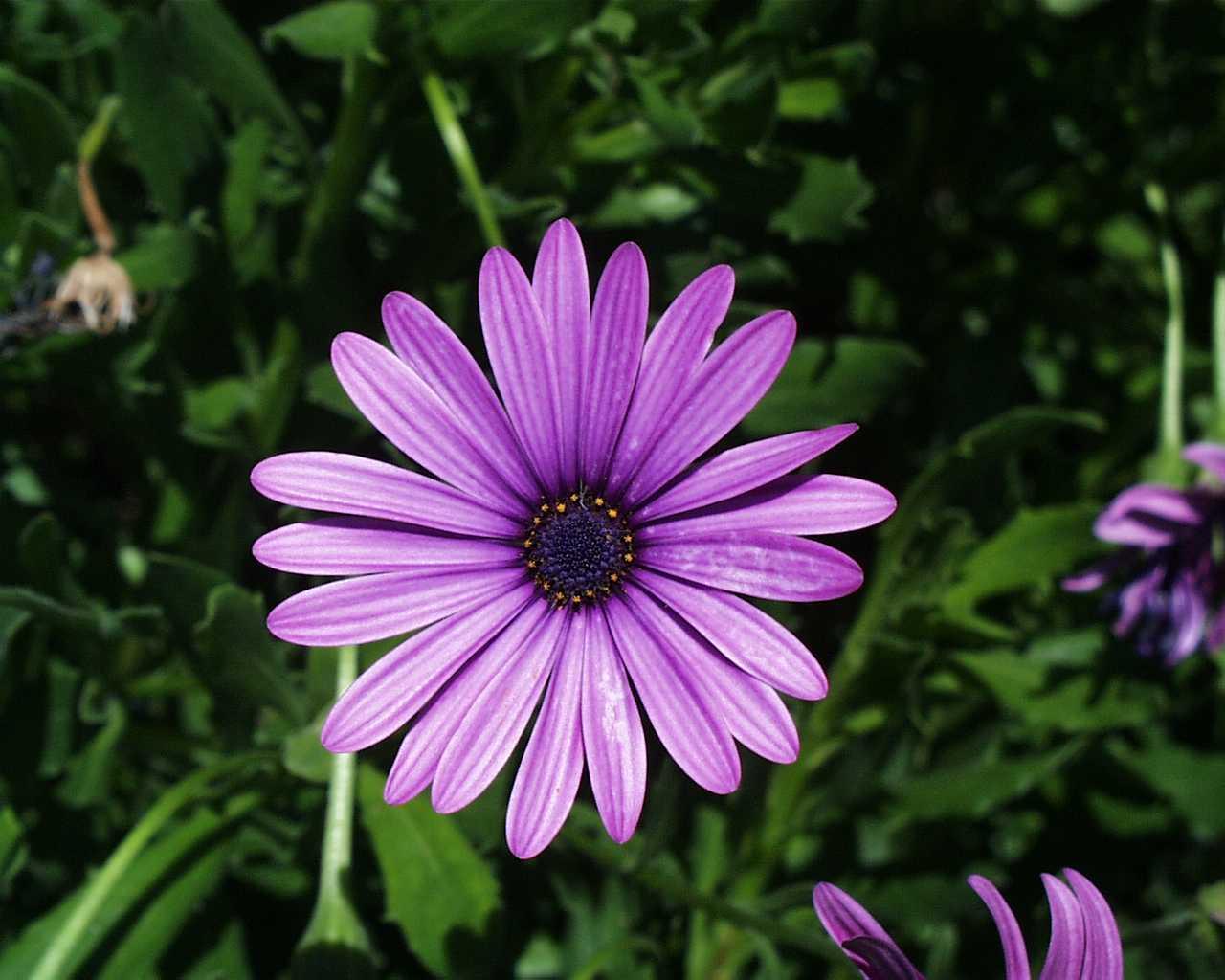 All types flower wallpaper flowers healthy purple flowers types wide wallpaper izmirmasajfo