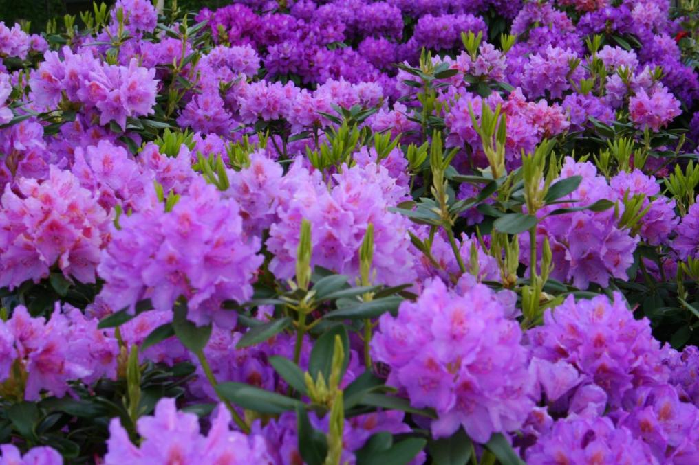 Purple Flowers Types Widescreen Wallpaper