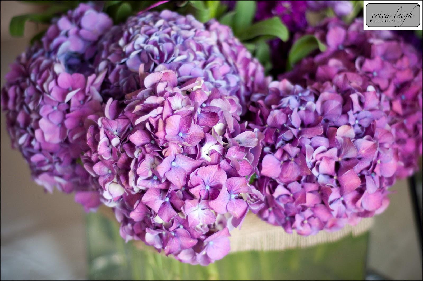 Purple Flowers Types Widescreen Wallpaper