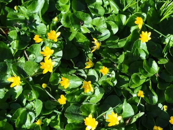 Small yellow flowers in yard 6 wide wallpaper hdflowerwallpaper small yellow flowers in yard hd wallpaper mightylinksfo