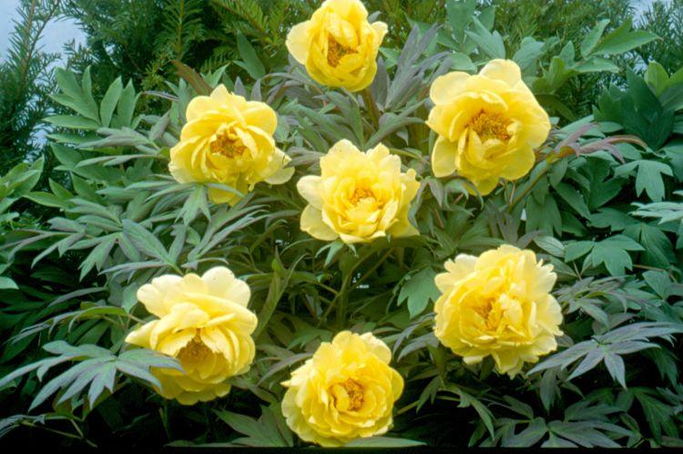 Tree Yellow Flowers Uk Hd Wallpaper