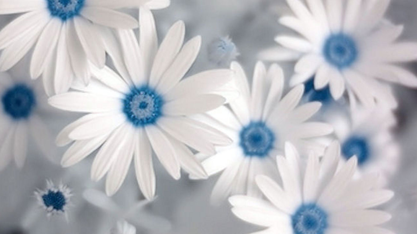 Blue Flowers With White Background Flowers Healthy