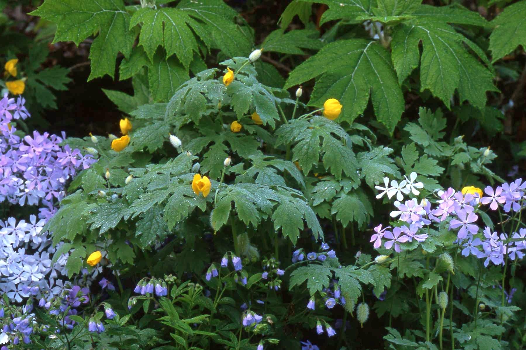 White flowers for shade garden 12 hd wallpaper hdflowerwallpaper white flowers for shade garden free wallpaper mightylinksfo