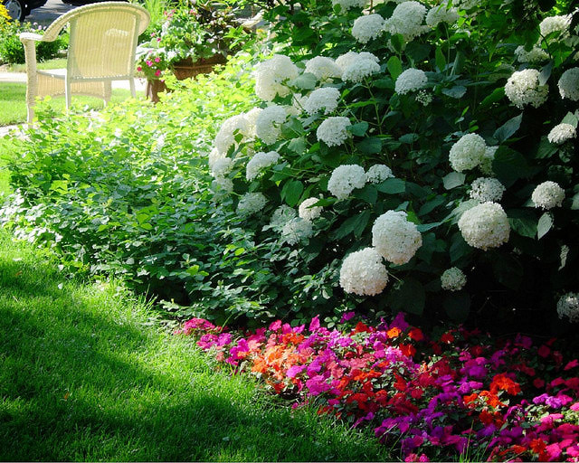 White flowers for shade garden 16 cool hd wallpaper white flowers for shade garden free wallpaper mightylinksfo