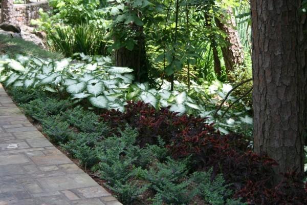 White flowers for shade garden 19 desktop wallpaper white flowers for shade garden free wallpaper mightylinksfo