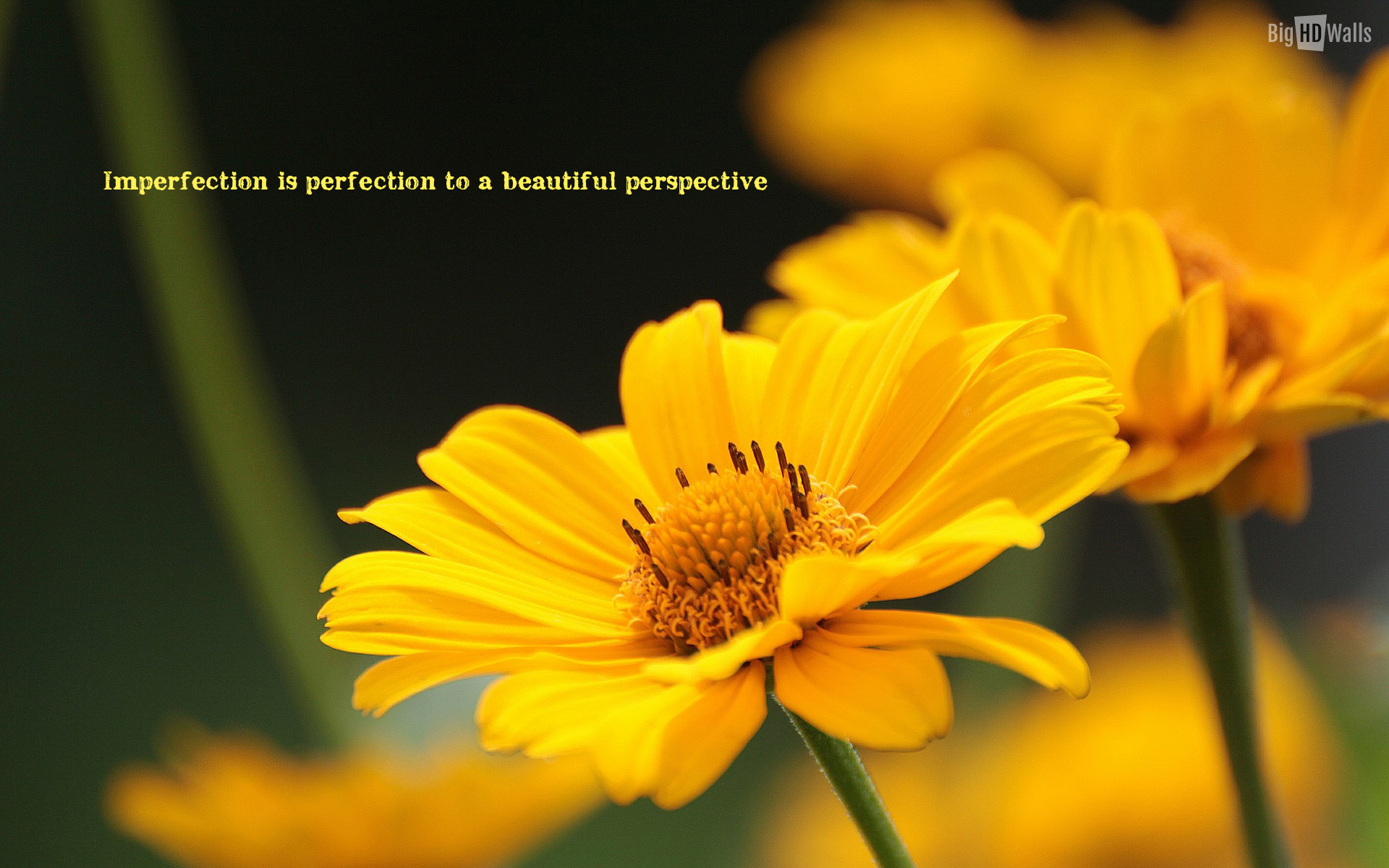 White Flowers Images With Quotes 2 Free Hd Wallpaper