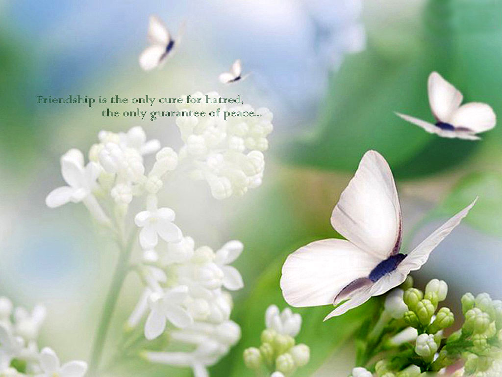 White Flowers Images With Quotes Background